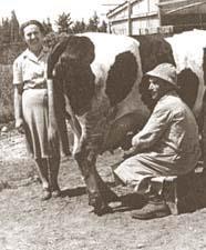 מרים שפירא בחברת ישראל בעלה בשעת חליבה