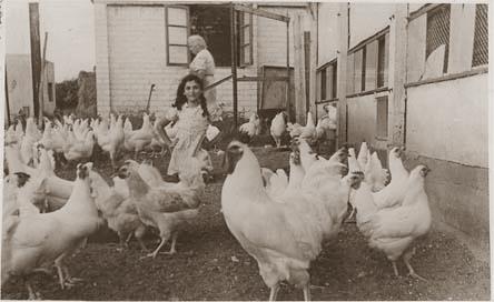 ניצה ליברמן (לנדאו) בחצר העופות